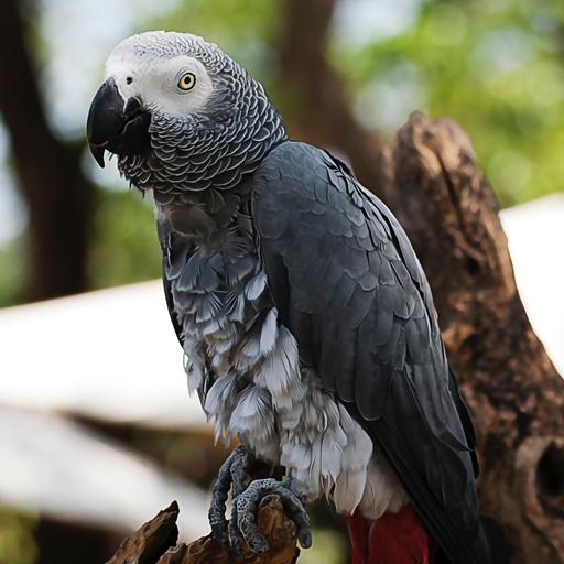 นกแอฟริกันเกรย์ (African Gay)