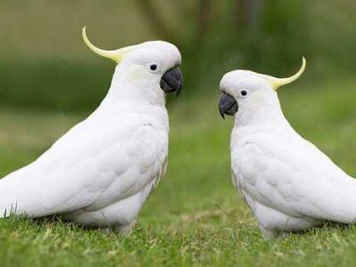 รูปร่างของนกกระตั้วและความแข็งแรงของจะงอยปาก