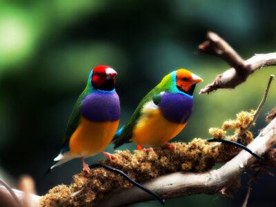 นกฟินซ์ (Goudian Finch)