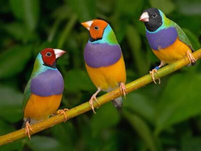 การเลี้ยงนกให้ถูกต้องนั้นต้องทำอย่างไร